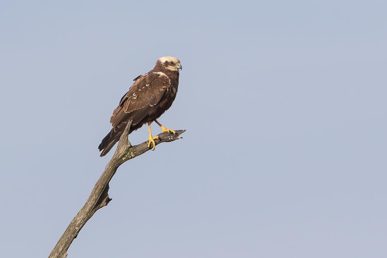 Réserve ornithologique du Teich 10_bus10
