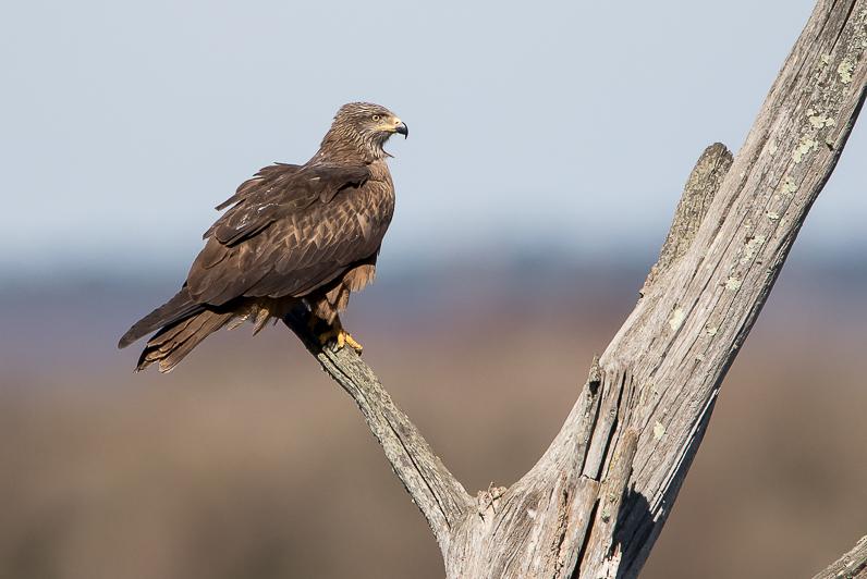 Réserve ornithologique du Teich 110