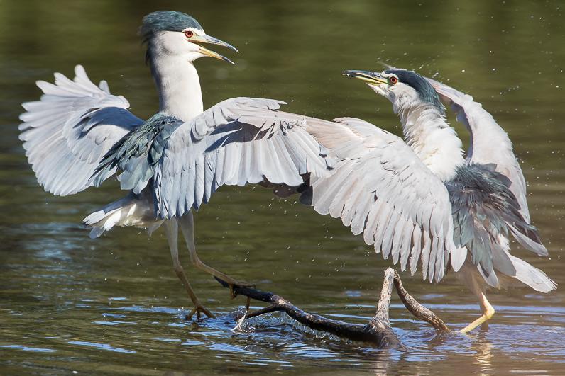 Réserve ornithologique du Teich 11_bih10