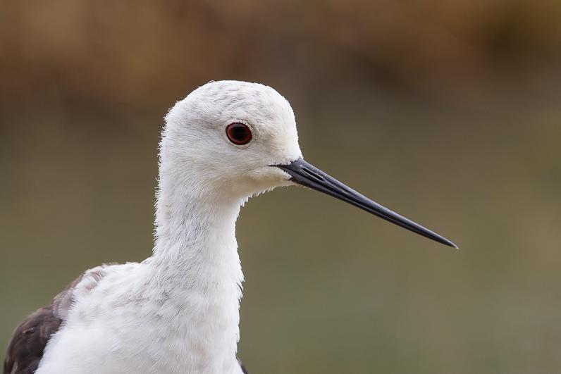 Réserve ornithologique du Teich 15_ech10