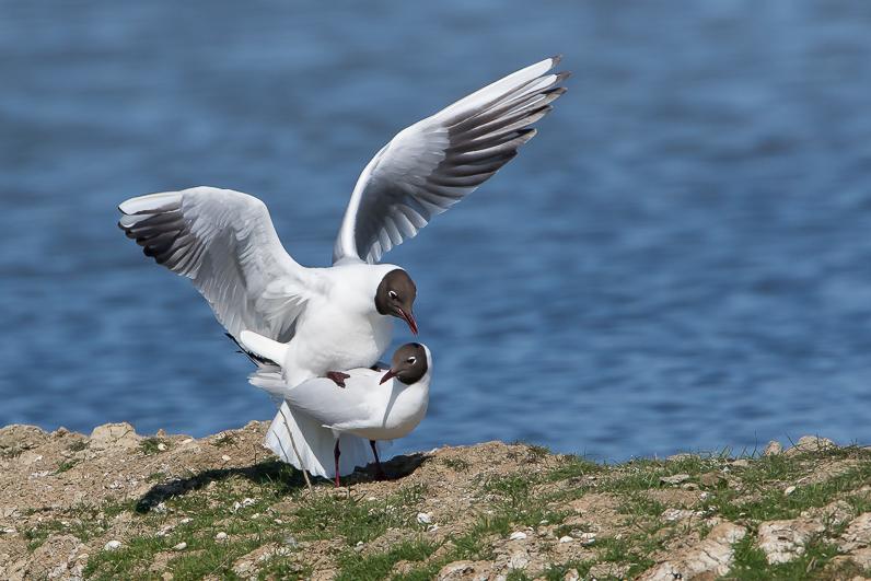 Réserve ornithologique du Teich Accoup10