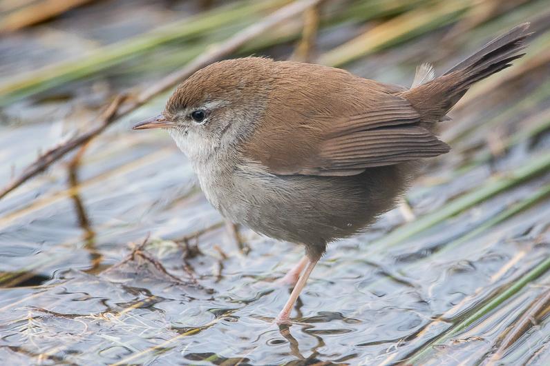 Réserve ornithologique du Teich Bousca10