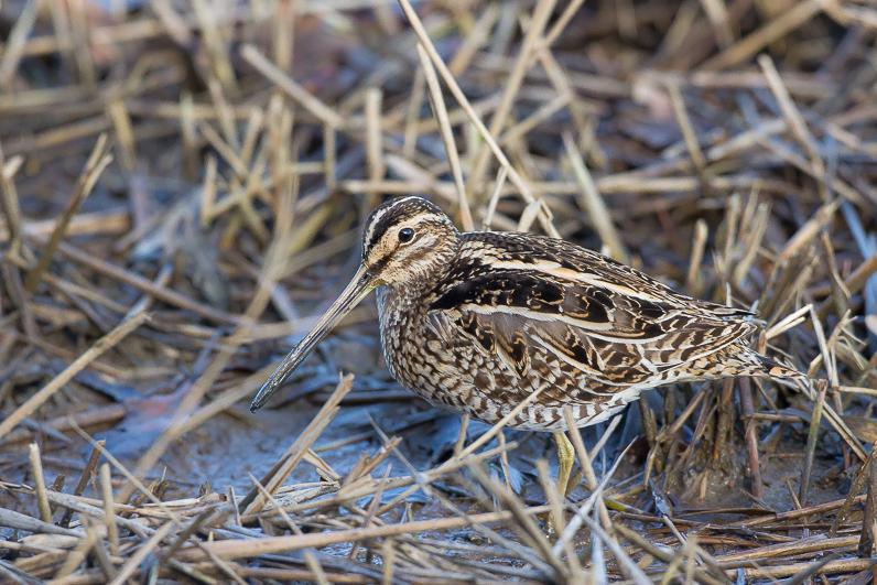 Réserve ornithologique du Teich Bzocas10
