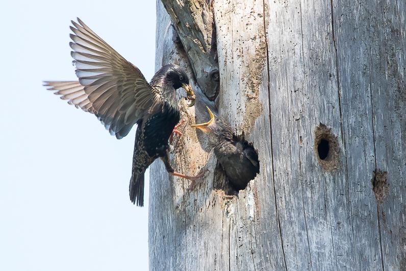 Réserve ornithologique du Teich Etourn10