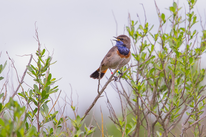Réserve ornithologique du Teich Gorgeb10
