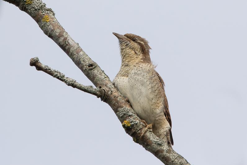 Réserve ornithologique du Teich Img_0210
