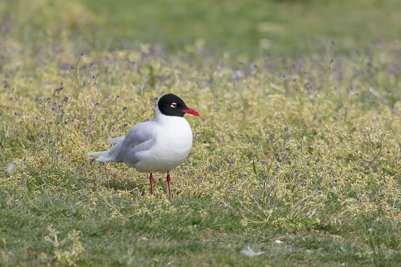 Réserve ornithologique du Teich Img_0211