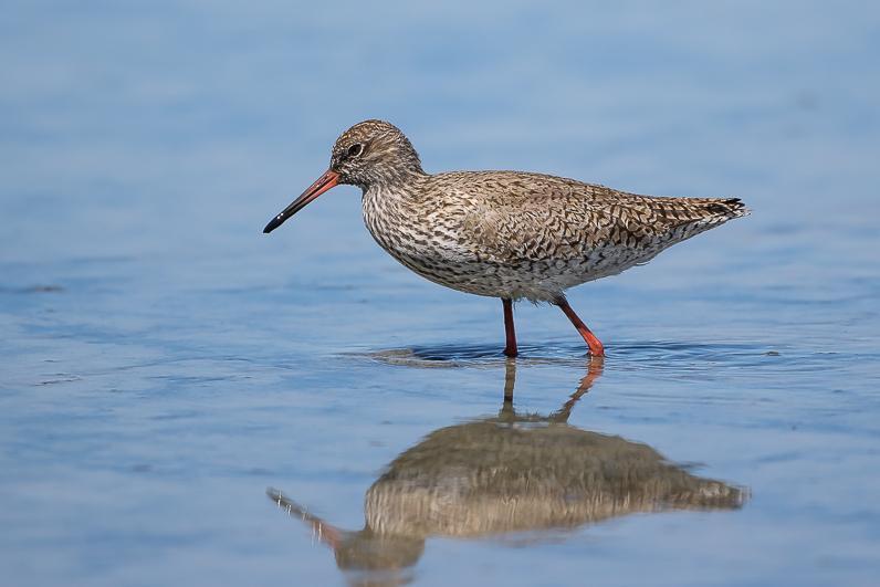 Réserve ornithologique du Teich Img_0610