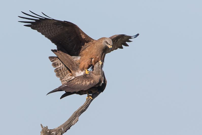 Réserve ornithologique du Teich Img_0710