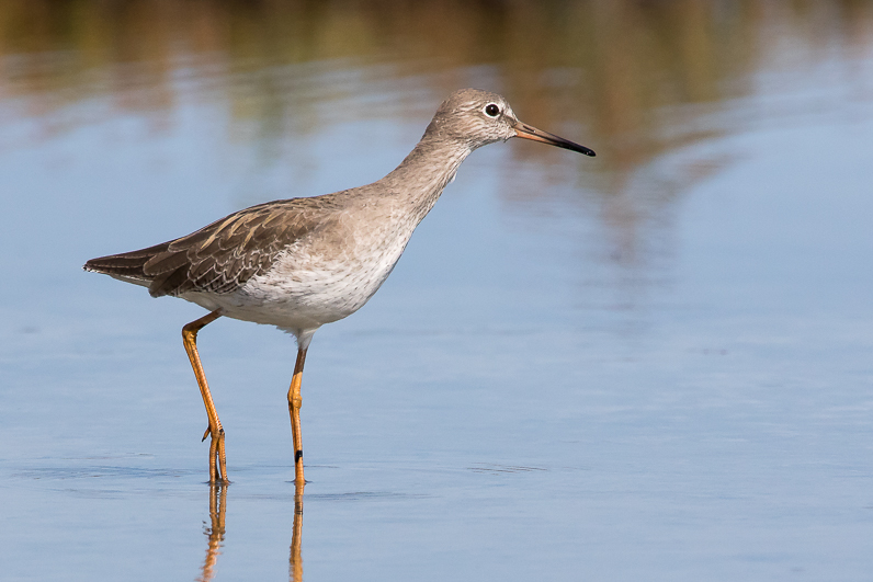 Réserve ornithologique du Teich Img_0911