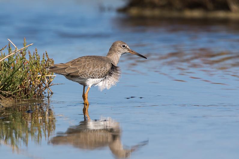 Réserve ornithologique du Teich Img_1010