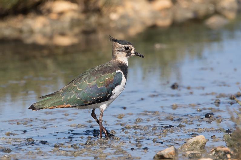 Réserve ornithologique du Teich Img_1011