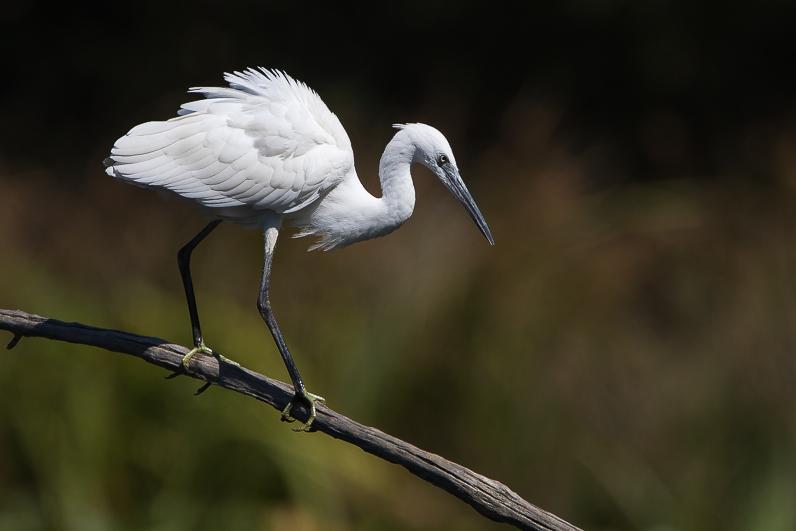 Réserve ornithologique du Teich Img_1110