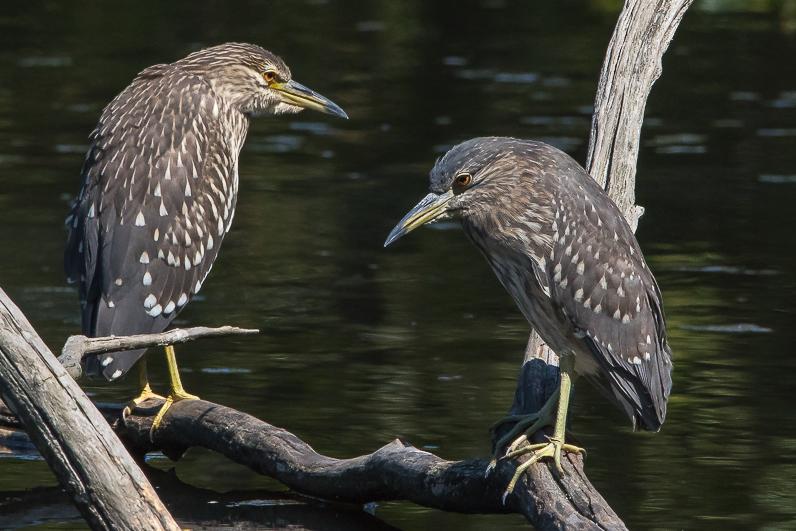Réserve ornithologique du Teich Img_1111