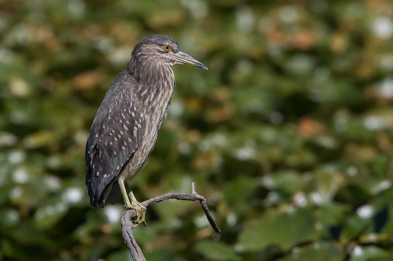 Réserve ornithologique du Teich Img_1210