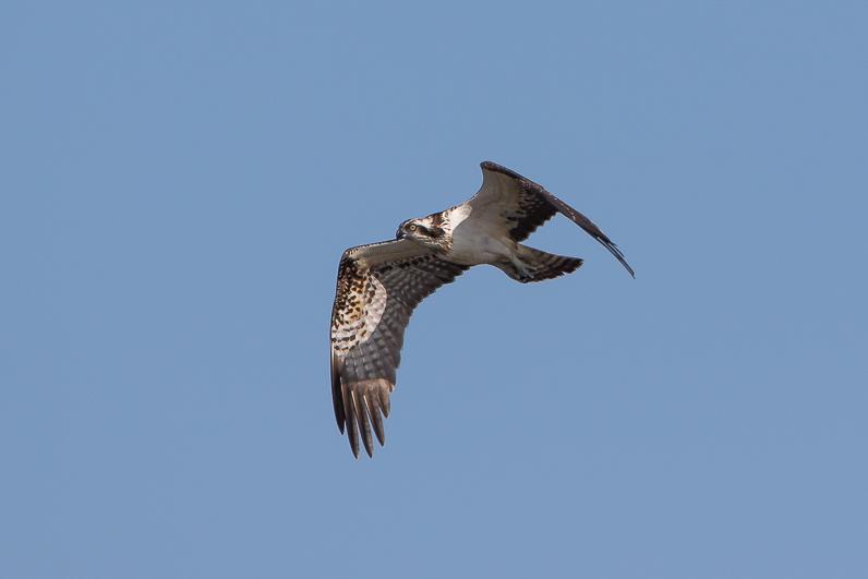 Réserve ornithologique du Teich Img_1810