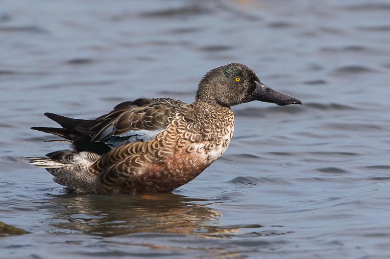 Réserve ornithologique du Teich Img_1811