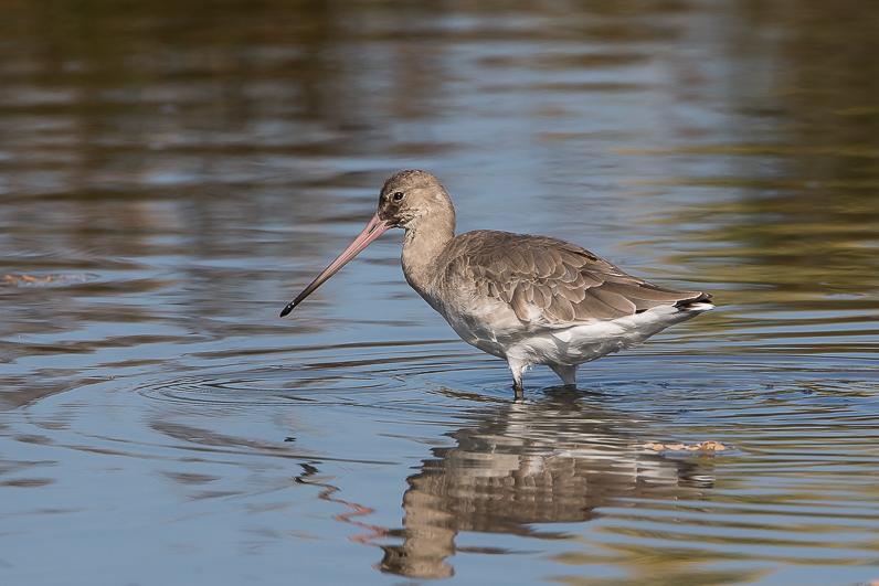 Réserve ornithologique du Teich Img_1812