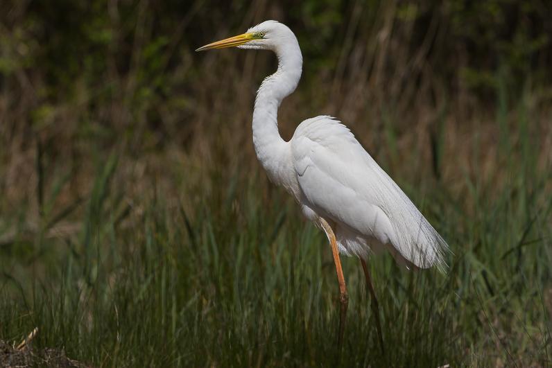Réserve ornithologique du Teich Img_2510