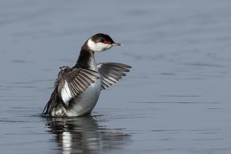 Réserve ornithologique du Teich Img_4310