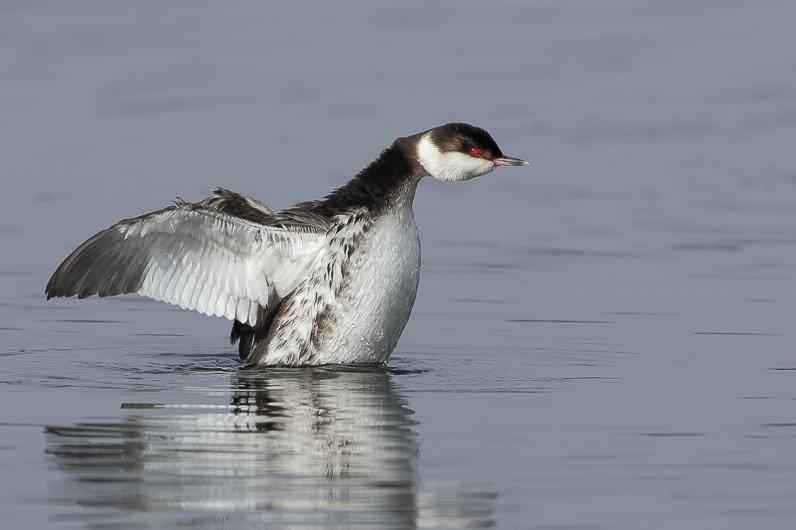 Réserve ornithologique du Teich Img_4311