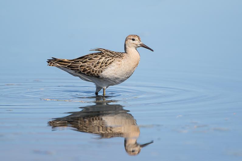 Réserve ornithologique du Teich Img_4810