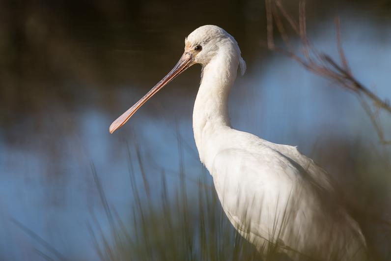 Réserve ornithologique du Teich Img_6811