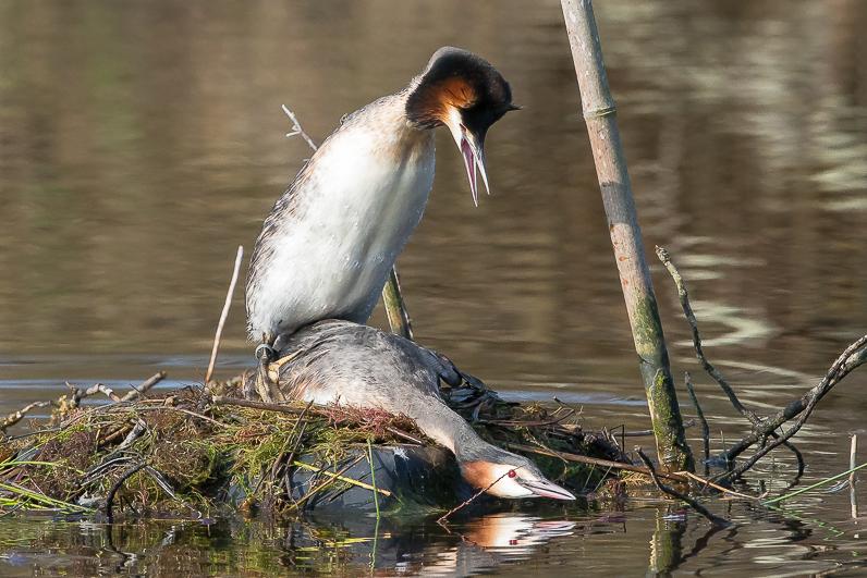 Réserve ornithologique du Teich Img_7910