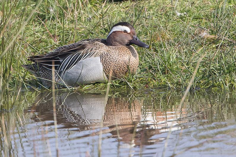Réserve ornithologique du Teich Img_7911