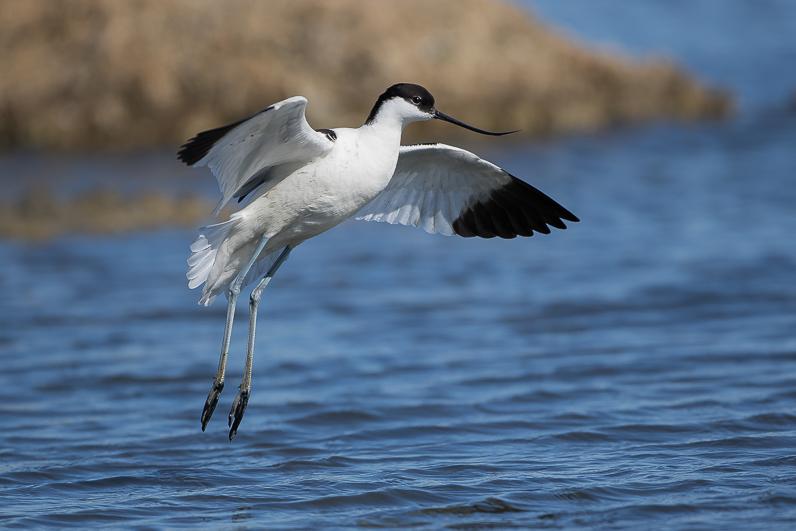 Réserve ornithologique du Teich Img_9810