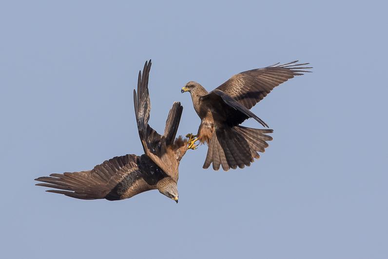 Réserve ornithologique du Teich Milans10