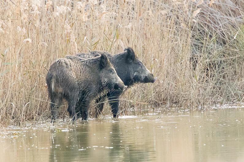 Réserve ornithologique du Teich Sangli10