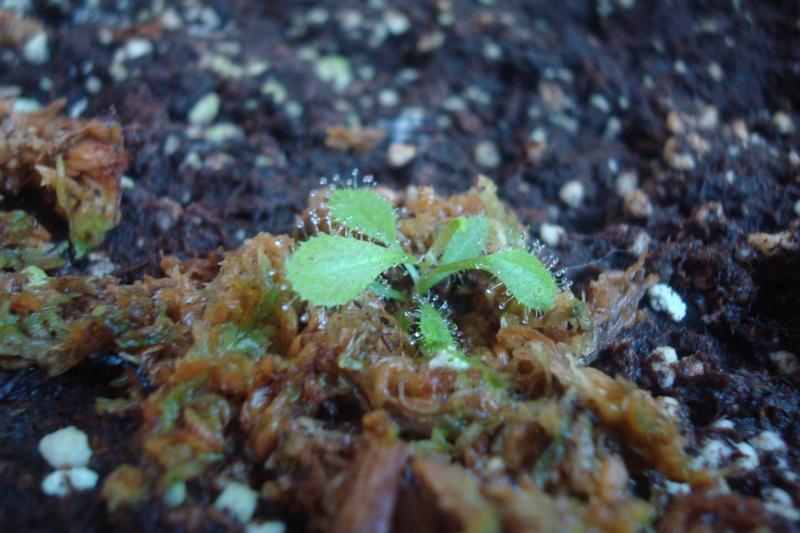 Les plantes de Ted82 - Page 6 Autre_10