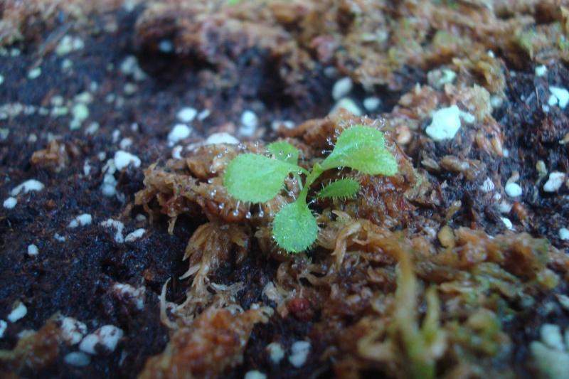 Les plantes de Ted82 - Page 6 D_adel10