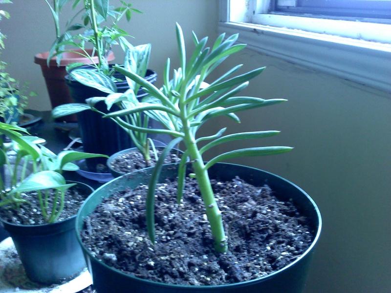 nouvel plante à identifier!!!! 01290310