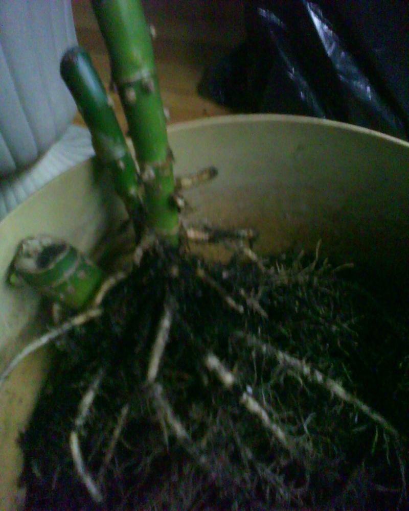 nouvelle information bouturale Plants13