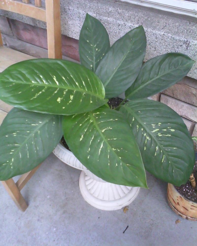 nouvelle information bouturale Plants17