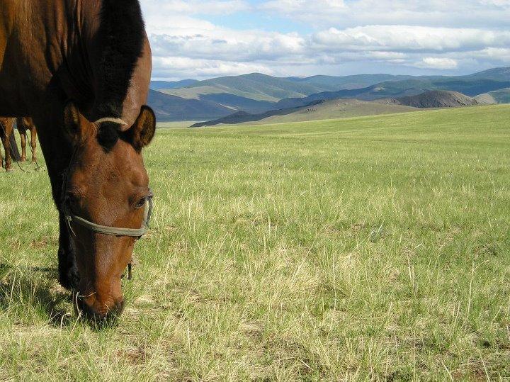 Tourisme à cheval Mongol12