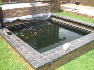 My Koi and Pond The_po10