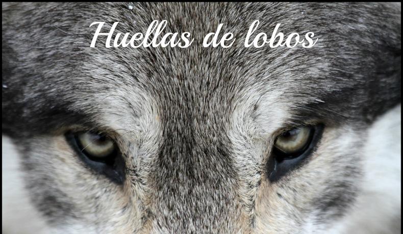Huellas de lobos.