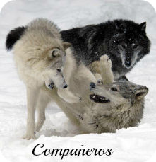 Lobos salvajes en Animal planet. Compaa10