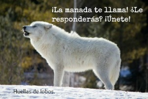 Pasion por los lobos...Animal Planet. Popup11