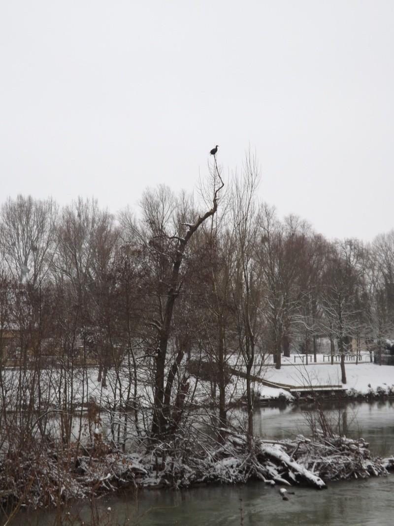Sortie sous la neige Dscf0021