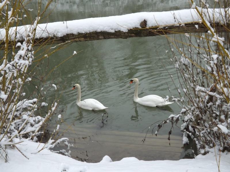 Sortie sous la neige Dscf0111