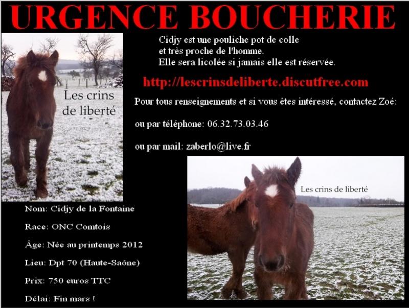 Dpt 70 - Cidjy de la Fontaine - ONC Comtoise - Sauvée par elise-et-delice (Mars 2013) - Page 2 Cidjy10
