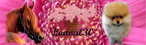 Commande pour Shyba by louval30 Louval11