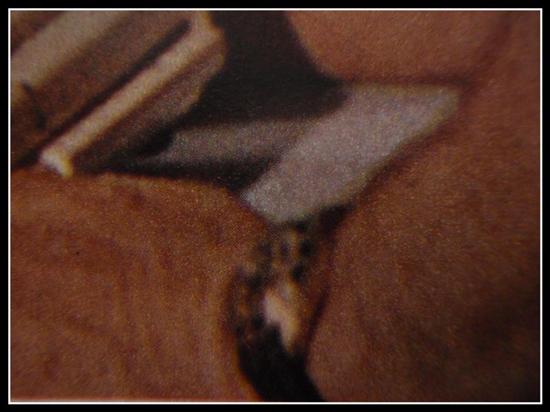 """quelles sont ces montres de l'épopée """"Cousteau"""".. P1260031"""