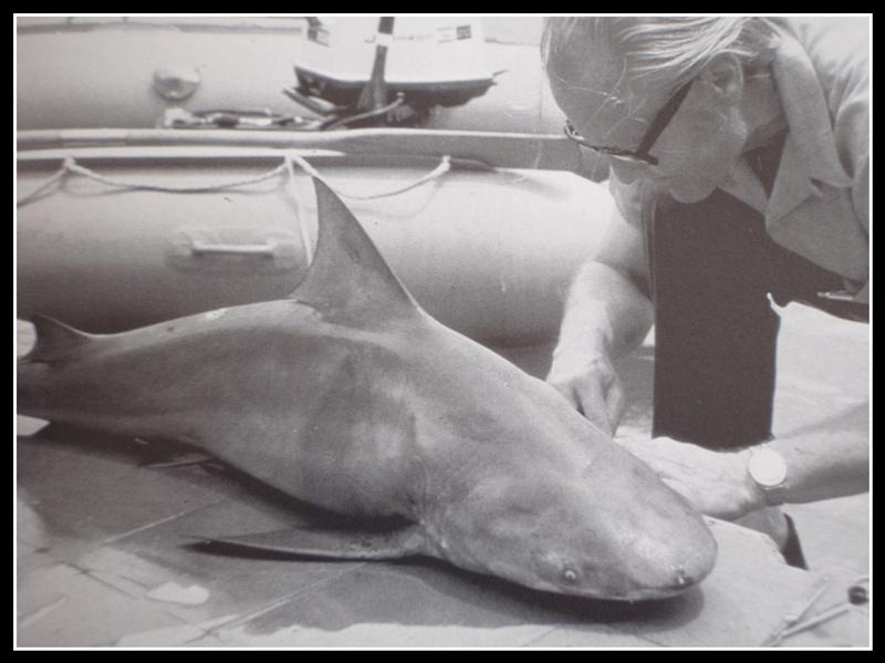 """quelles sont ces montres de l'épopée """"Cousteau"""".. P1260038"""