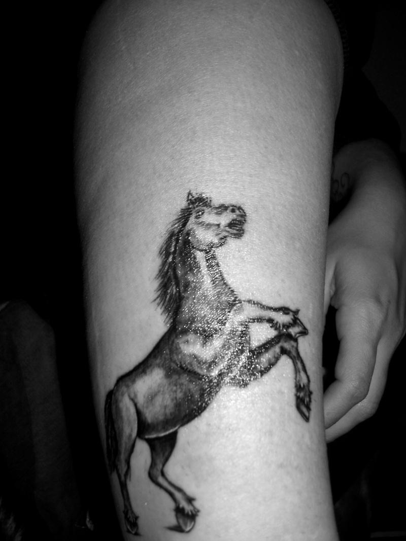 Tatouage de cheval Dscf6310