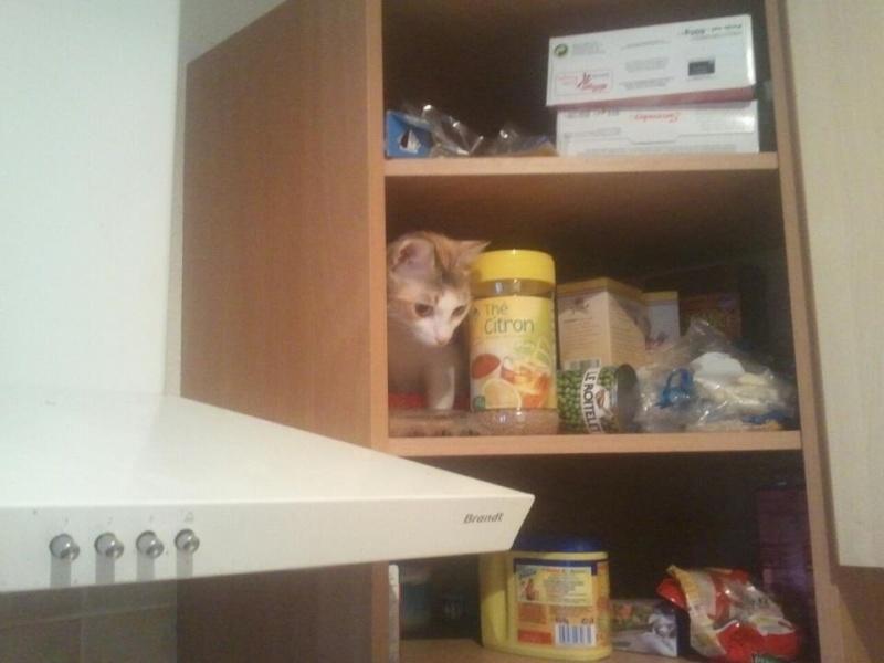 Quelle est la pire bêtise faite par vos chats ? Giny2110
